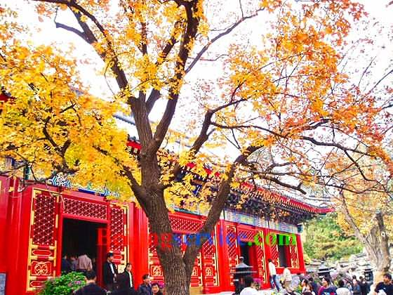 Photo of Fragrant Hill Beijing 19