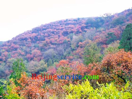 Photo of Fragrant Hill Beijing 44